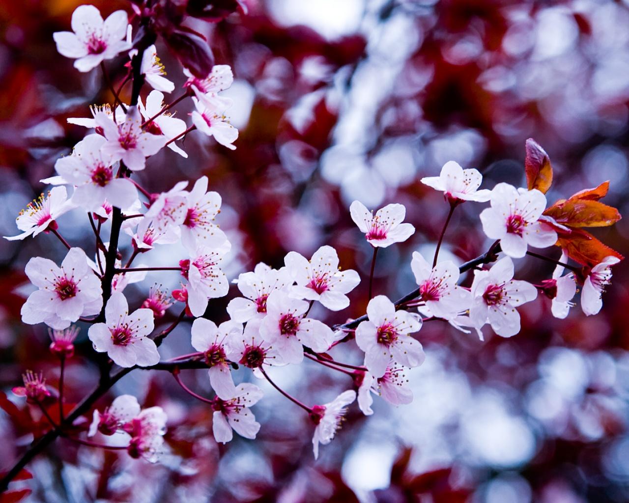 Выгодная и экономная весна